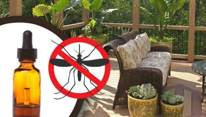 19 ways to keep mosquitoes away from your patio