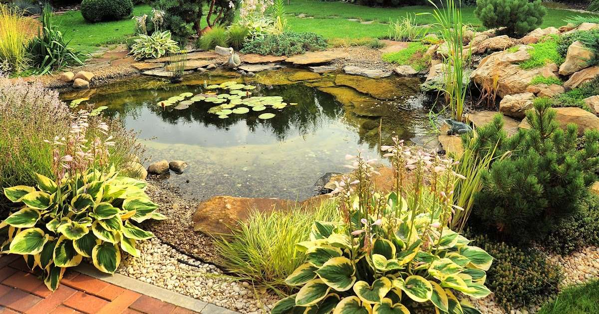 How To Get Rid Of Algae In Ponds Apps Directories