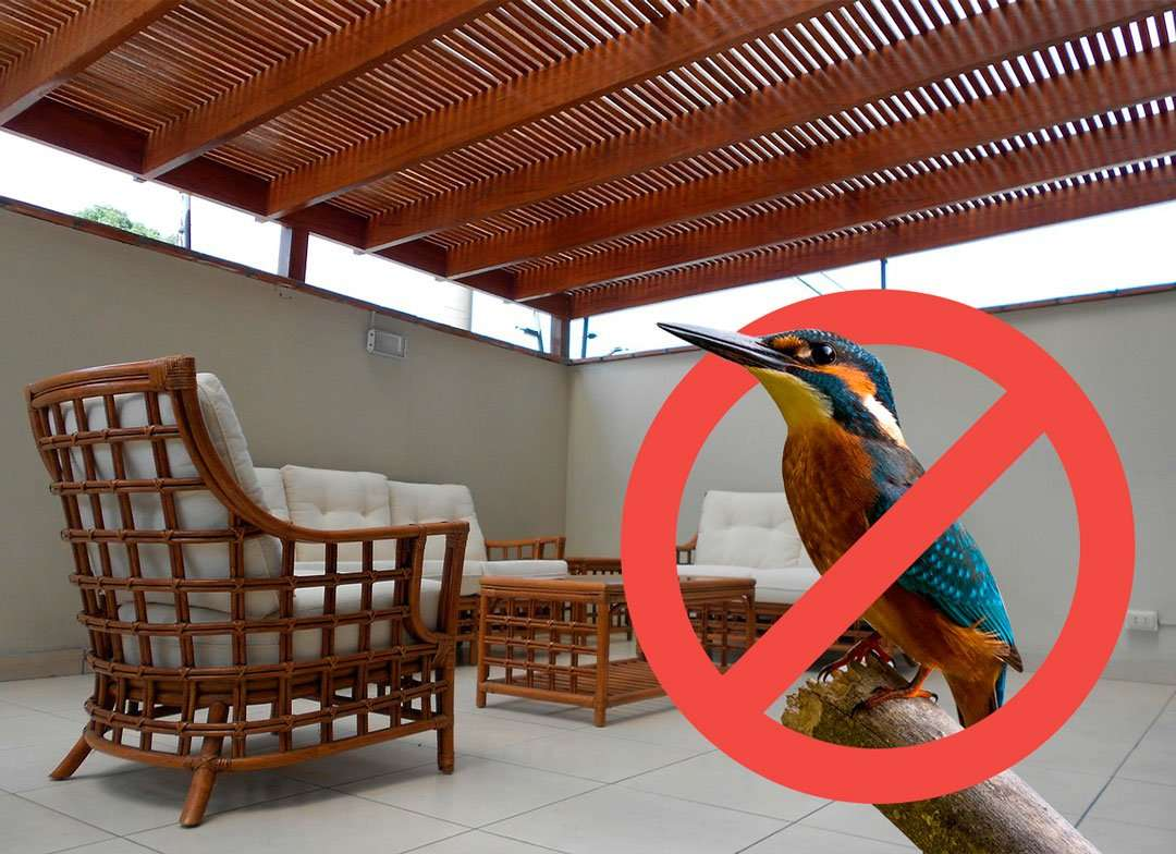 How to Get Rid of Birds Pooping on Patio