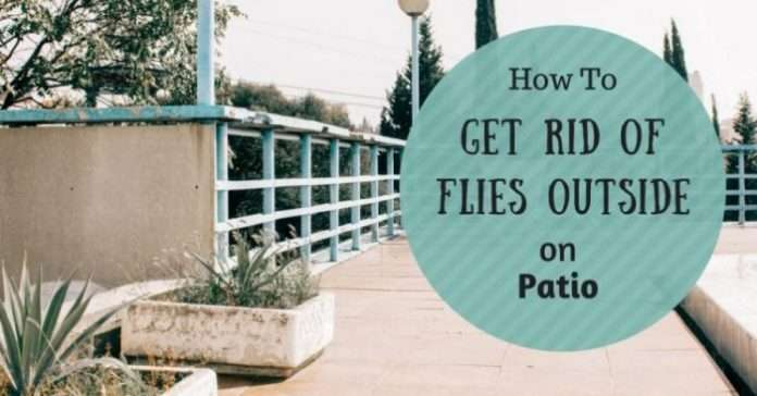 how to get rid of flies outside on patio pest survival guide