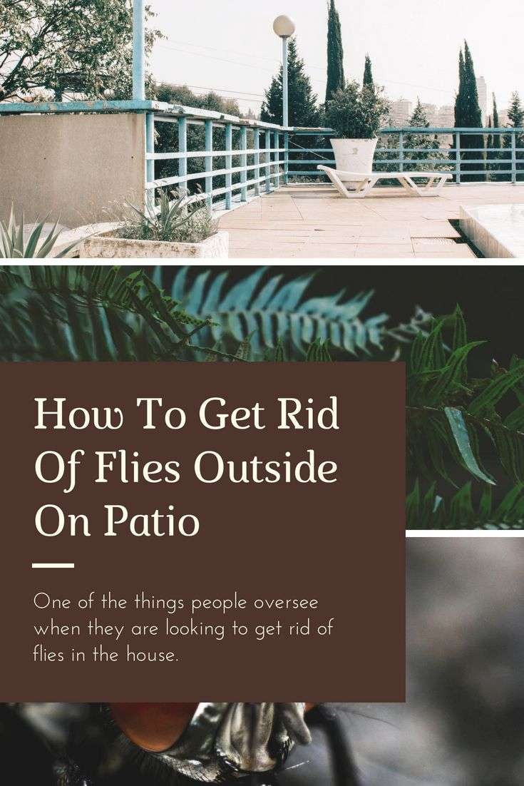 How To Get Rid Of Flies Outside On Patio