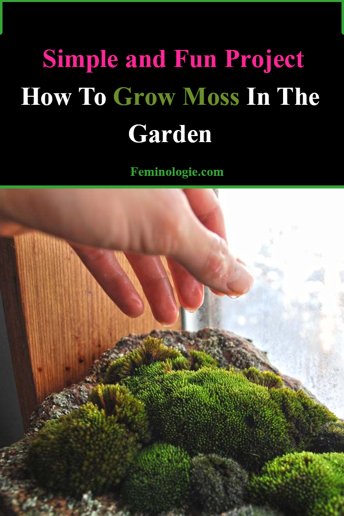 How To Grow Moss In The Garden in 2020