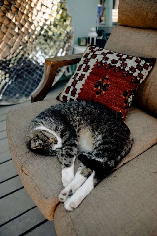 How to Keep Cats Off Outdoor Patio Furniture – Sunshine & Play