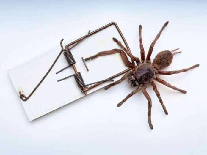 how to keep spiders away from your deck or patio